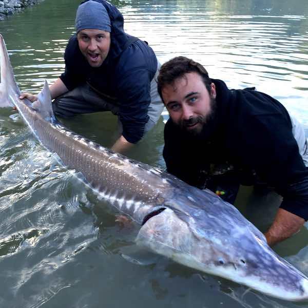 sturgeon fishing